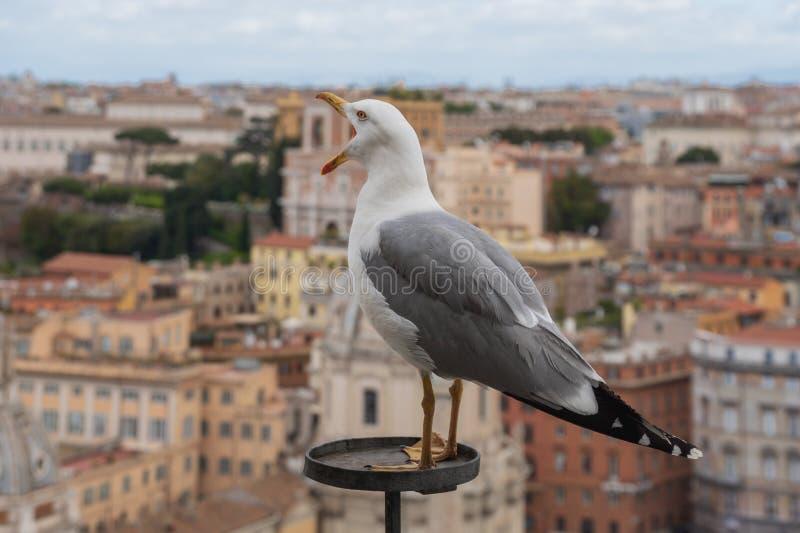 Mouette et dessus de toit de Rome photos libres de droits