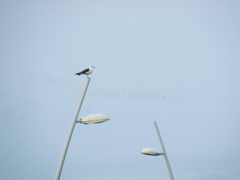 Mouette et lanternes image libre de droits