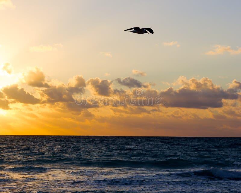 Mouette et lever de soleil au-dessus de la mer image stock