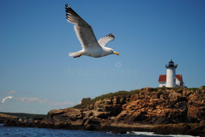 Mouette et phare de la Nouvelle Angleterre photos libres de droits