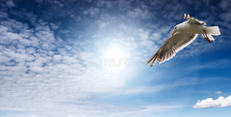 Mouette Flaying photographie stock
