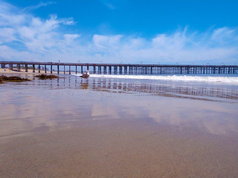 Mouette grande-angulaire de pilier de Ventura de vue d'océan sur la plage vide photo libre de droits