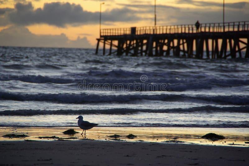 Mouette, jetée, coucher du soleil photo stock