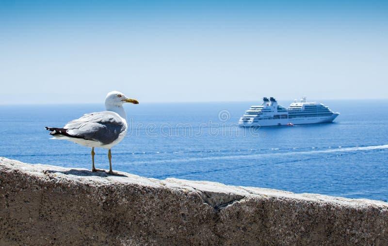 Mouette observant un bateau images libres de droits
