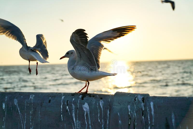 Mouette ouvrant ses ailes photo stock
