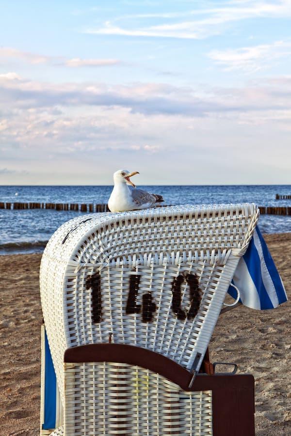 Mouette se reposant sur la chaise de plage à la mer baltique photo stock