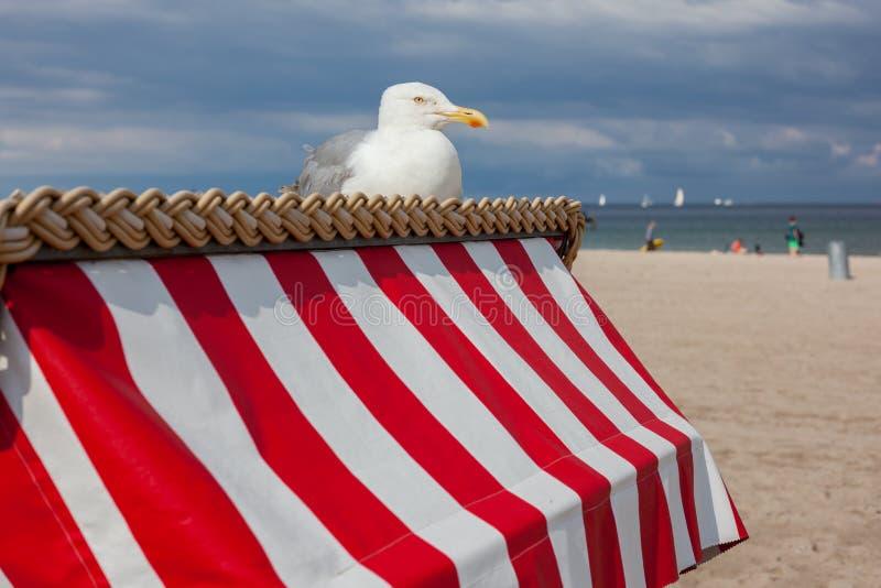 Mouette se reposant sur la chaise de plage photos stock