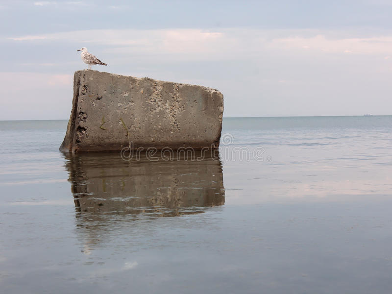 Mouette se reposant sur une grande roche au bord de la mer Paysage de paix et de spokoystaiya Shtil image stock
