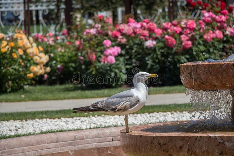 Mouette simple en parc image stock