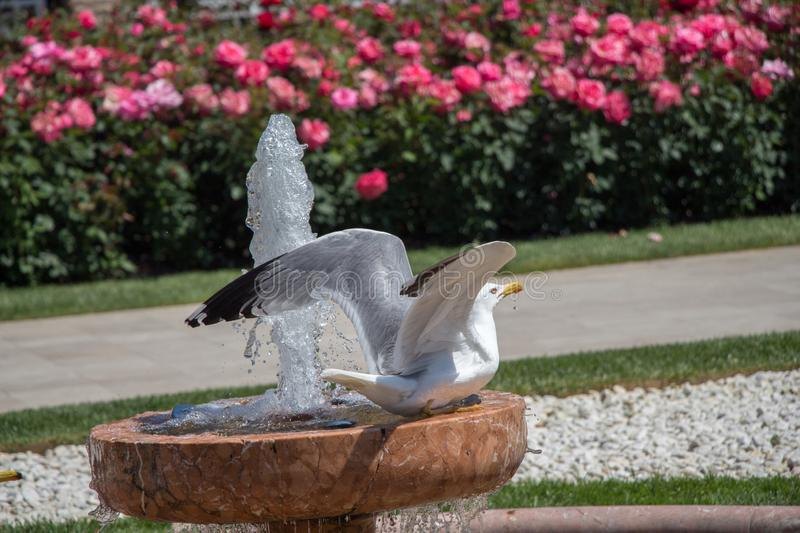 Mouette simple en parc photographie stock