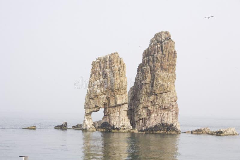 Download Mouette solitaire image stock. Image du falaises, mouette - 56482743