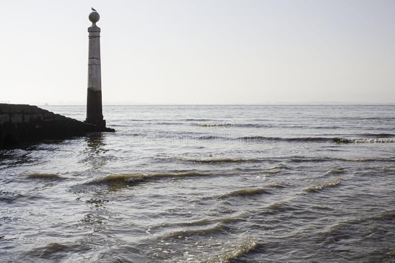 Download Mouette Sur Des Vagues De Mer Image stock - Image du over, côte: 77154939