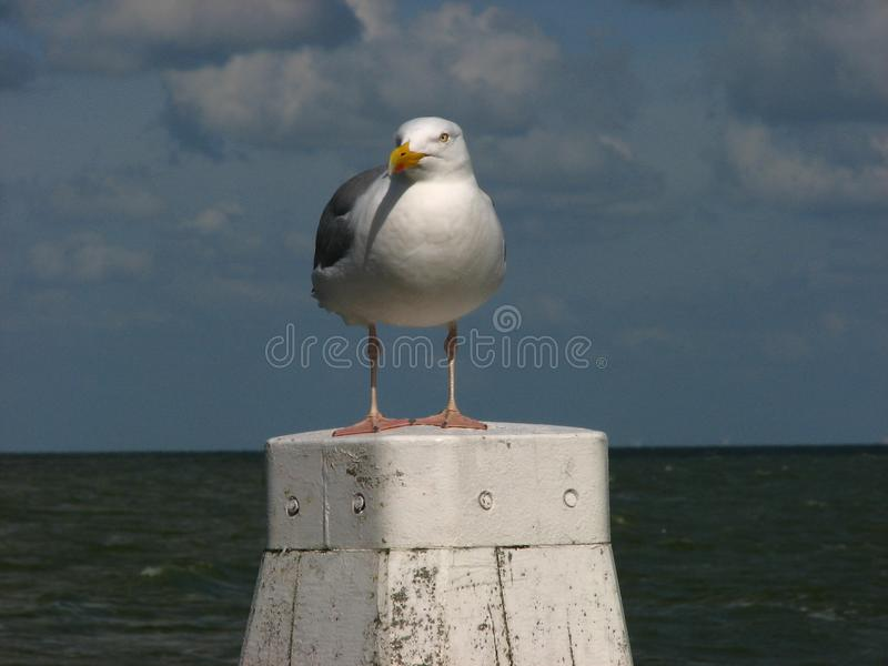 Mouette sur la borne photos stock