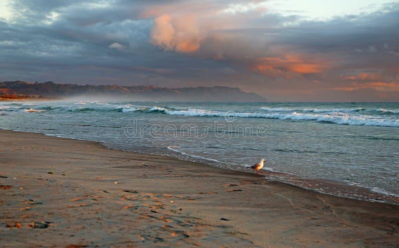 Mouette sur la plage de Waihi image libre de droits