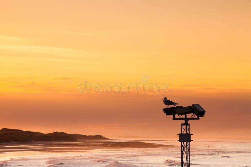 Mouette sur la plage vide dans Seahauses photo stock