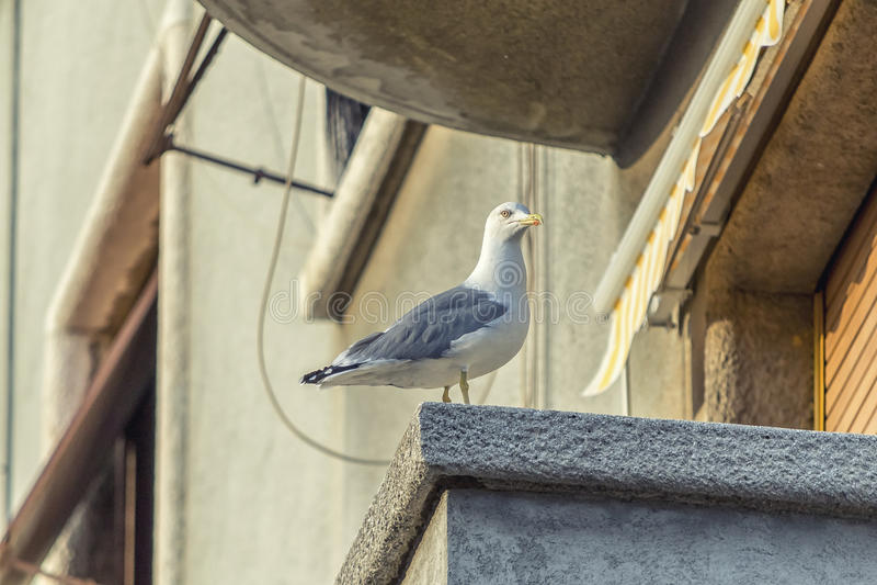 Download Mouette sur le balcon image stock. Image du moment, reste - 45353421