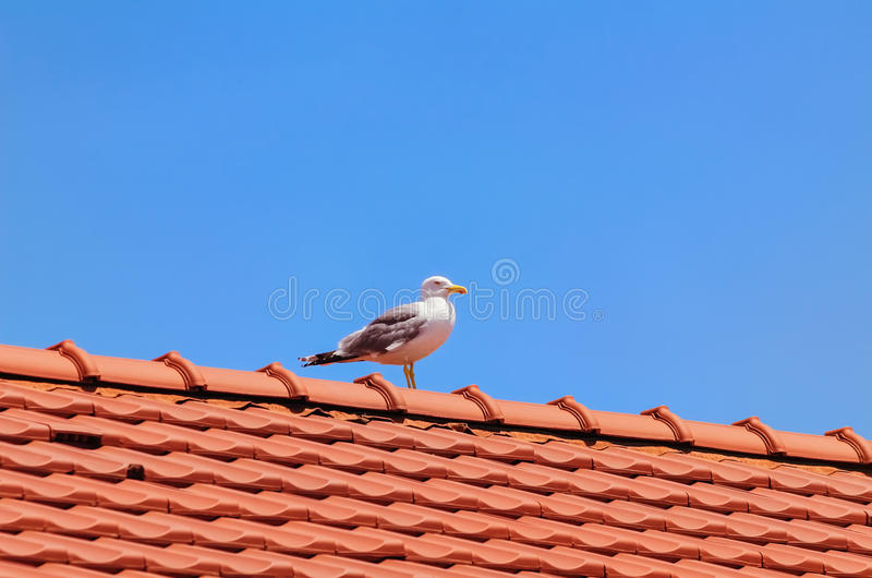 Mouette sur le toit photos stock
