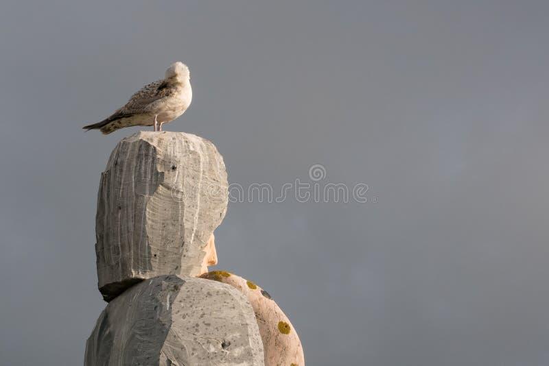 Mouette sur les roches empilées de granit lissant des plumes photos stock