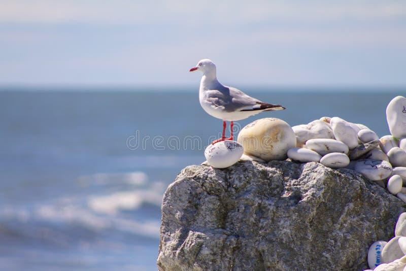 Mouette sur une roche avec le message étendant l'OM une plage chez Bruce Bay photographie stock