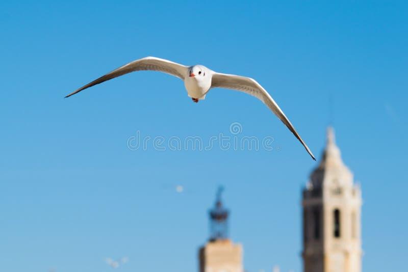 Mouette volant haut dans le ciel bleu photos libres de droits