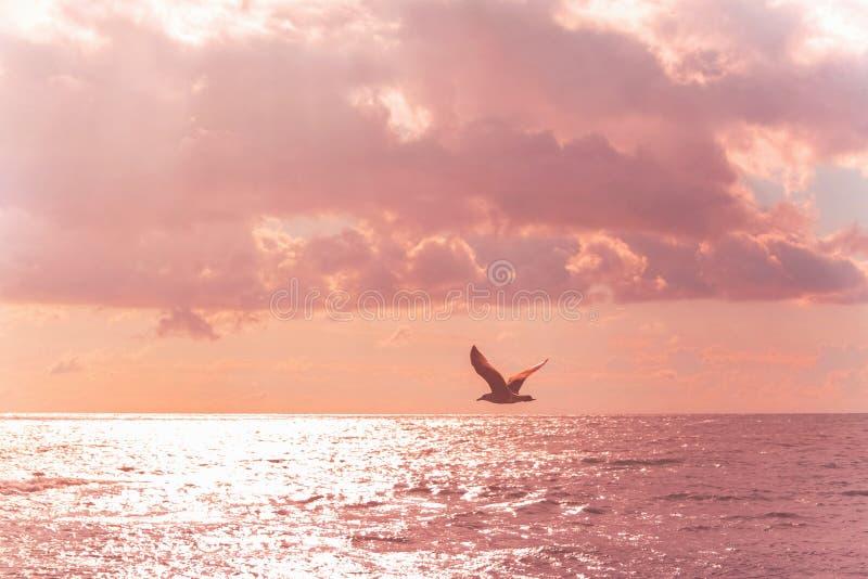 Mouette volante dans le ciel rose pourpre Belle mer couleur photo stock