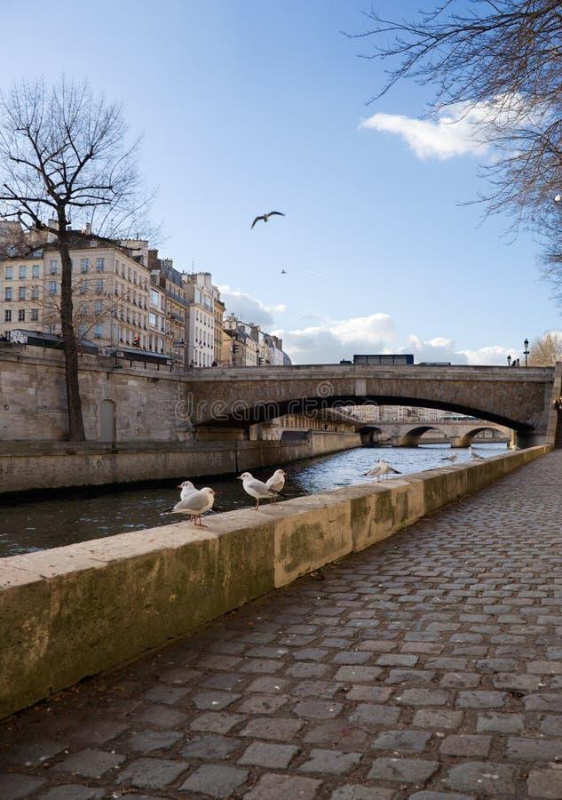 Mouettes à Paris images libres de droits