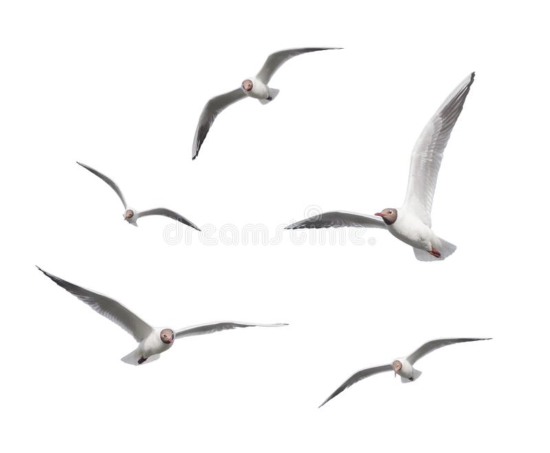 mouettes photographie stock