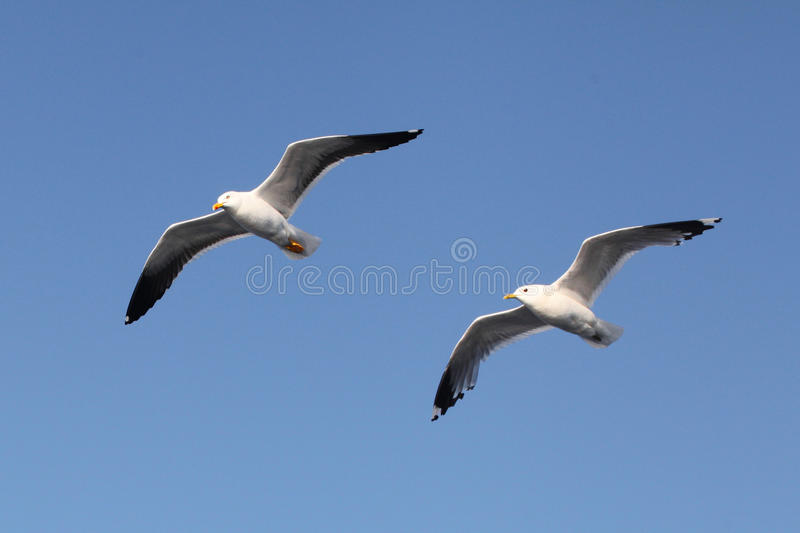 Mouettes images stock