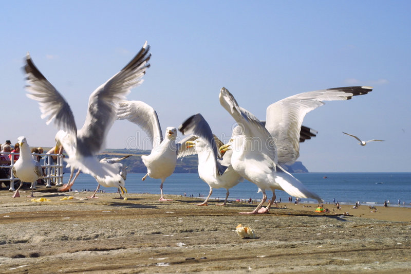 Download Mouettes photo stock. Image du concurrence, animaux, nature - 68084