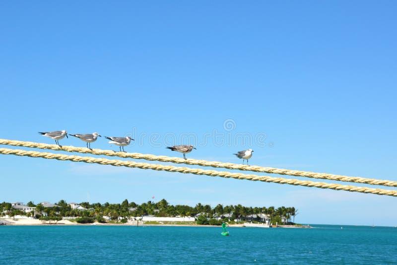 Mouettes au-dessus d'île photo stock
