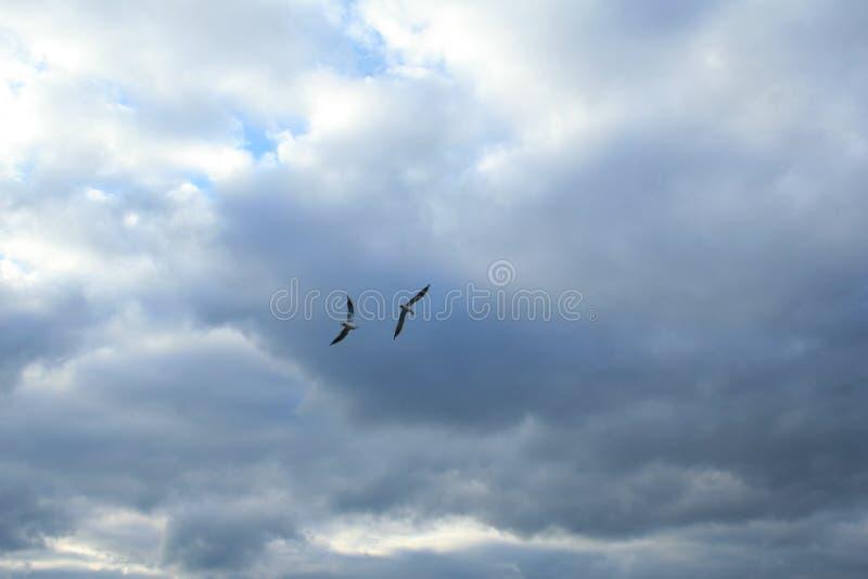 Mouettes au-dessus de la mer photographie stock libre de droits