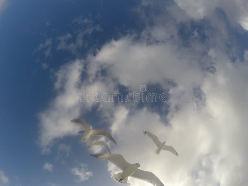 Mouettes au-dessus du ciel photographie stock