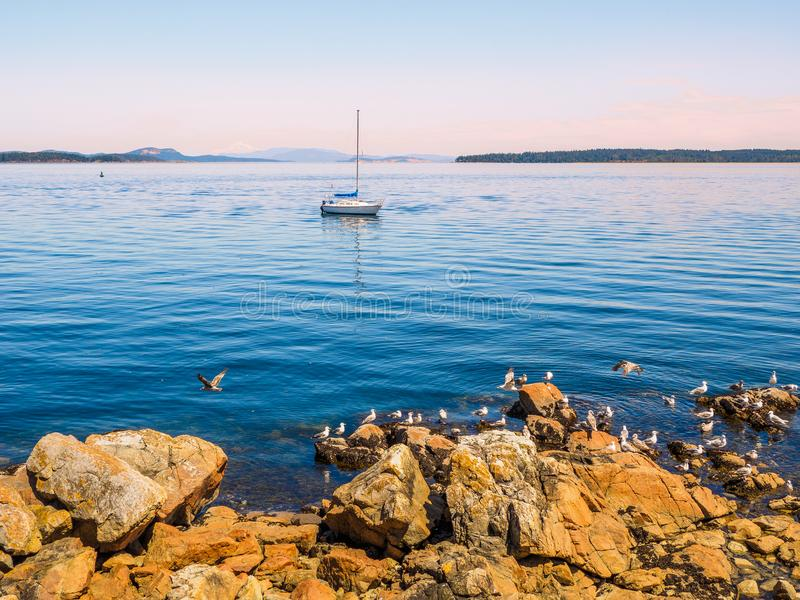 Mouettes au rivage rocheux de Sidney AVANT JÉSUS CHRIST, Canada image libre de droits
