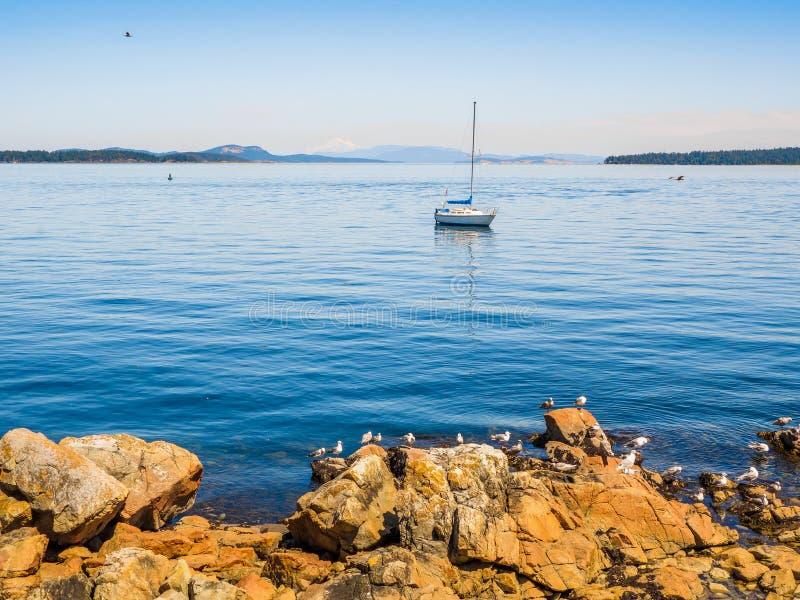 Mouettes au rivage rocheux de Sidney AVANT JÉSUS CHRIST, Canada photos libres de droits