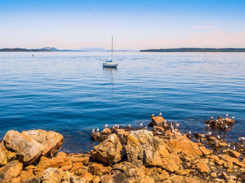 Mouettes au rivage rocheux de Sidney AVANT JÉSUS CHRIST, Canada images stock