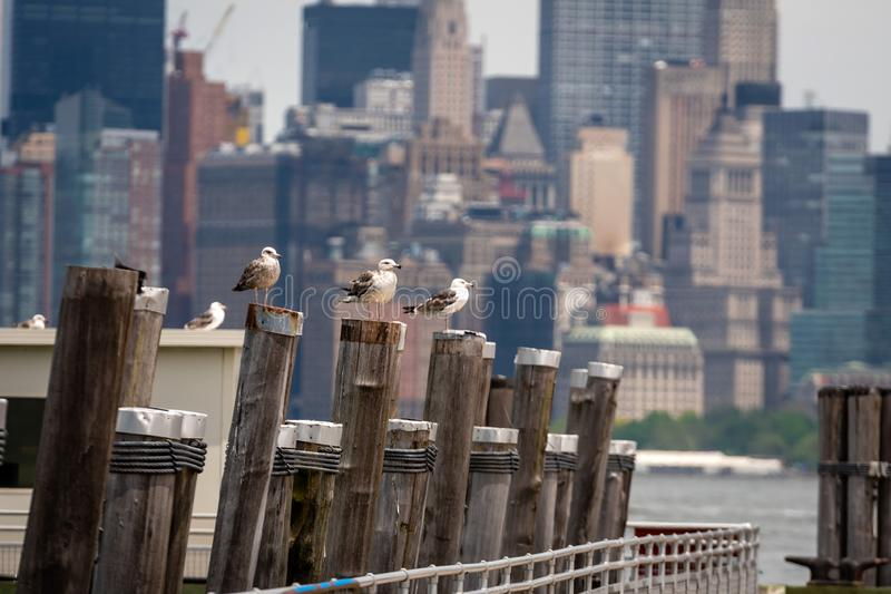Mouettes au vieux dock de ferry sur Liberty Island près de New York City, Etats-Unis - image photo libre de droits