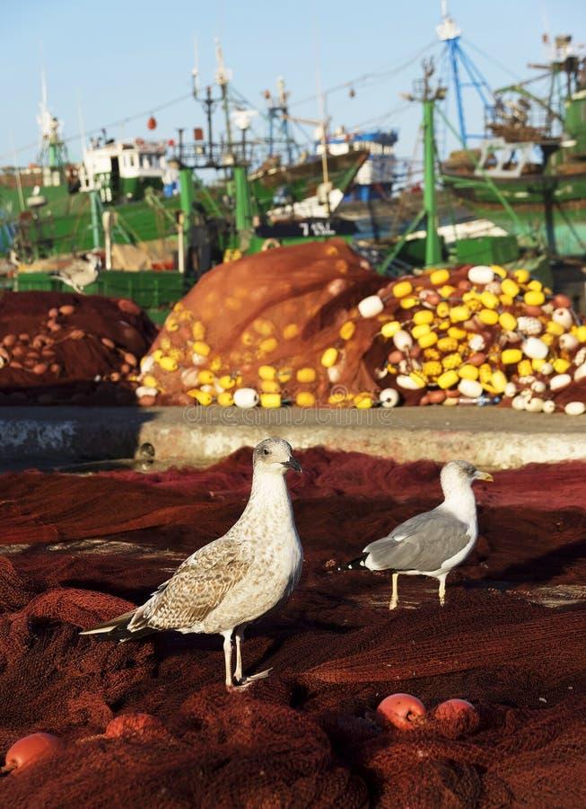 Mouettes dans Essaouira photo stock