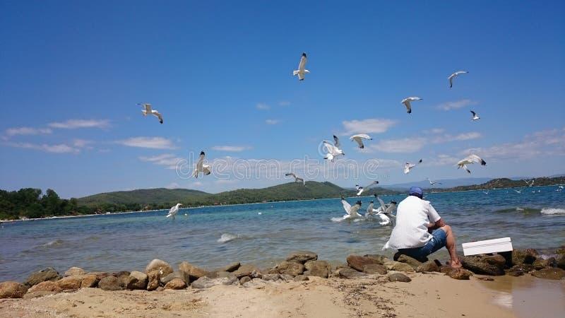 Mouettes de alimentation de vieux pêcheur image libre de droits