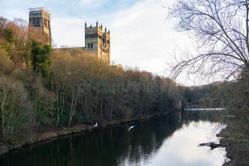 Mouettes de château et de cathédrale et de voler de Durham au-dessus de l'usage de rivière, Angleterre, R-U photo libre de droits