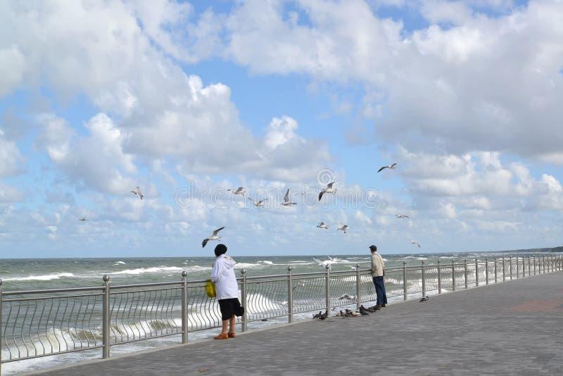 Mouettes de montre de personnes sur la banque de la mer baltique photographie stock libre de droits