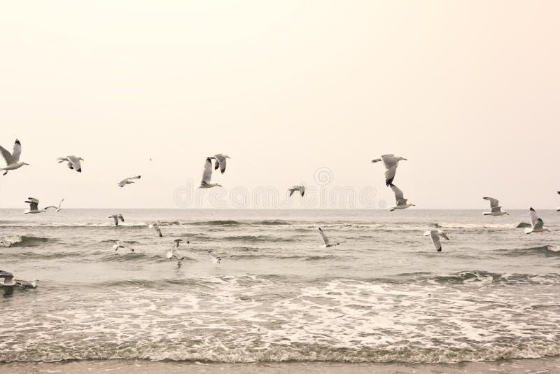 Mouettes de vol à la plage photos stock