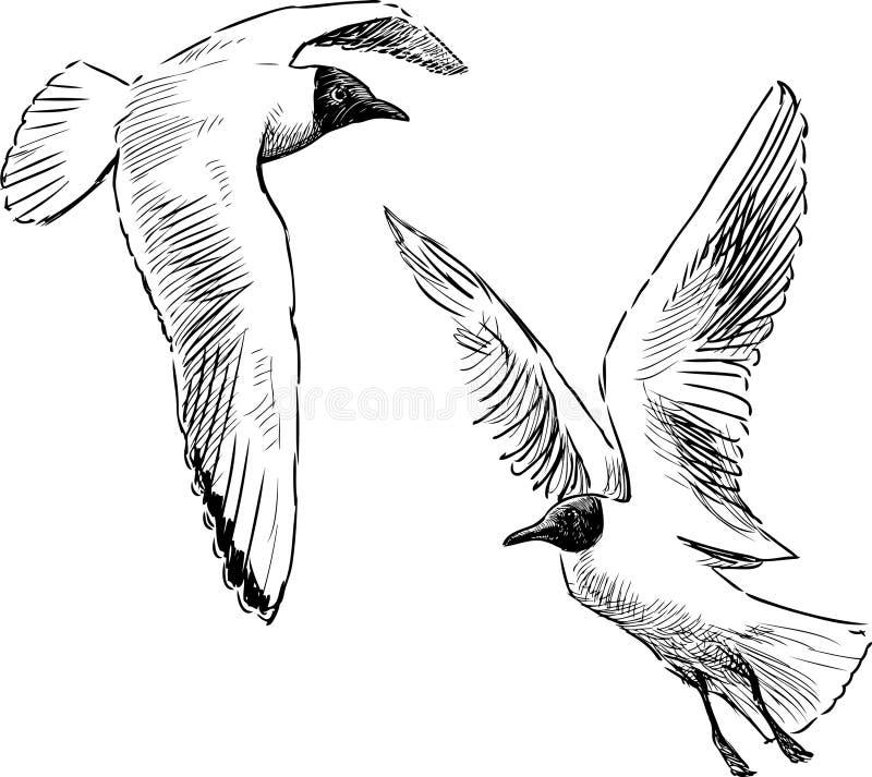 Mouettes de vol illustration de vecteur illustration du - Dessins de mouettes ...