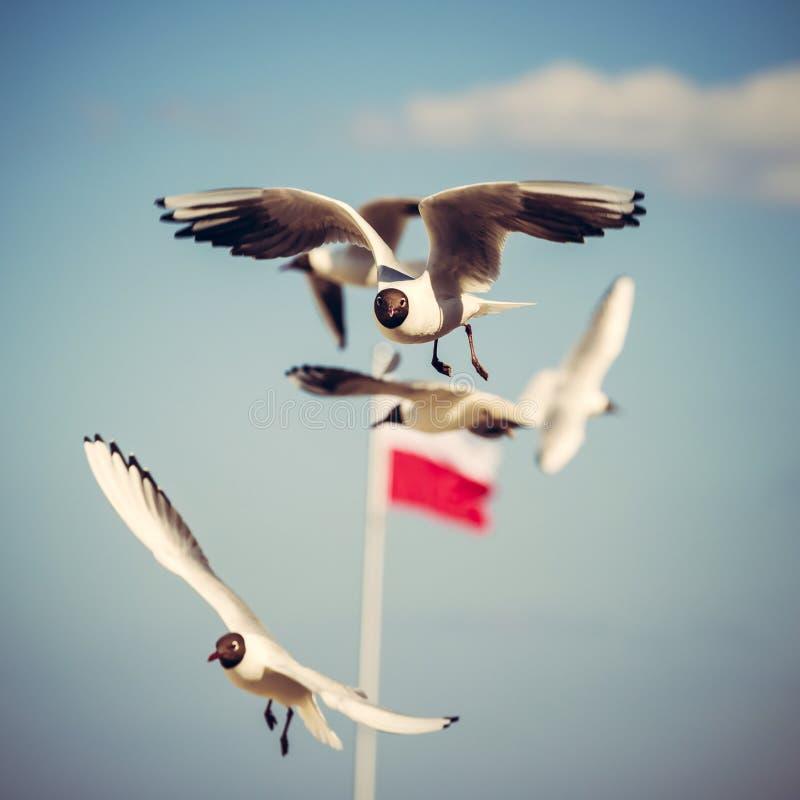 Mouettes de vol photographie stock libre de droits