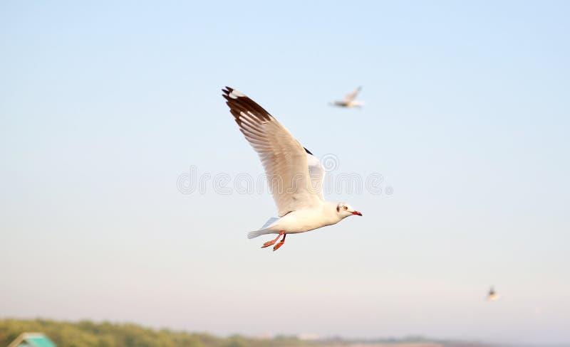 Mouettes de vol dans le ciel photo stock