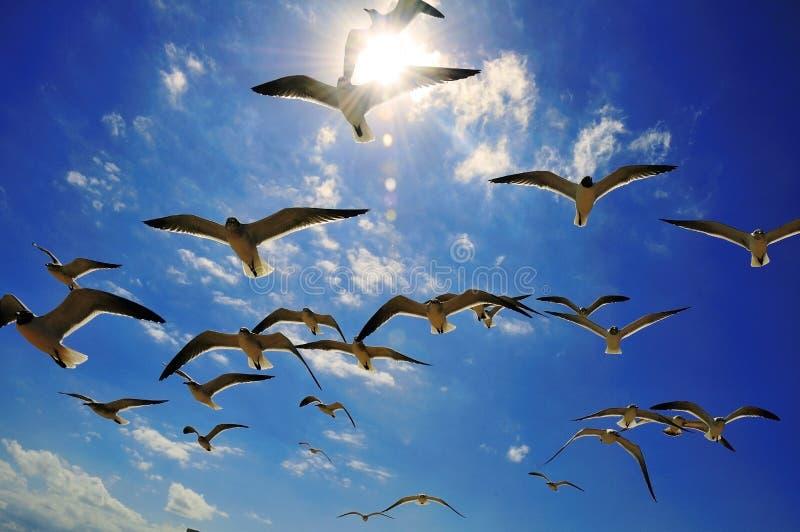 Mouettes et lumière du soleil photographie stock libre de droits
