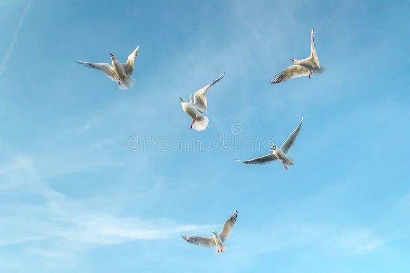 Mouettes sur la mer image libre de droits
