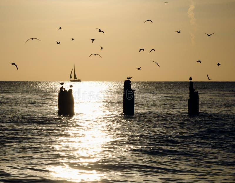 Mouettes sur la mer photographie stock libre de droits
