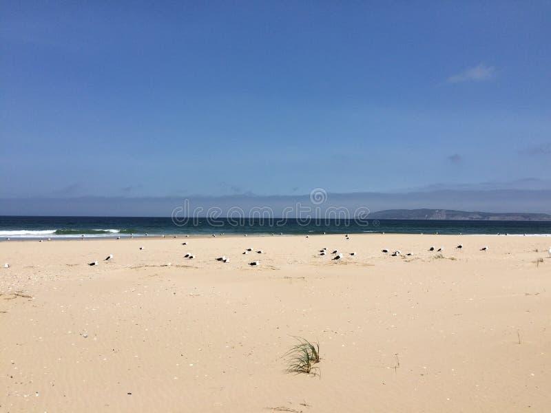 Mouettes sur la plage photos libres de droits