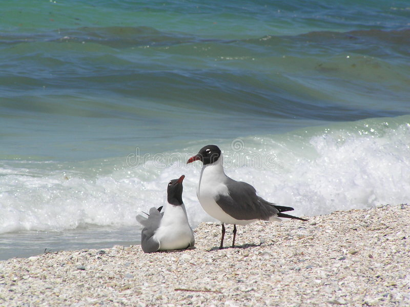 Mouettes sur la plage photo stock