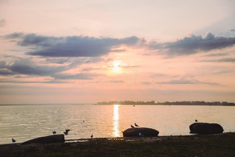 Mouettes sur la plage au lever de soleil images libres de droits